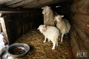 благотворительная акция «1000 овец»