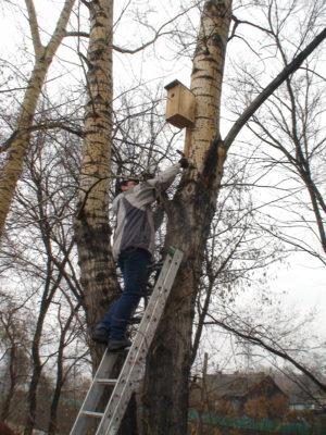 Сотрудники Центра устанавливают домик для птиц